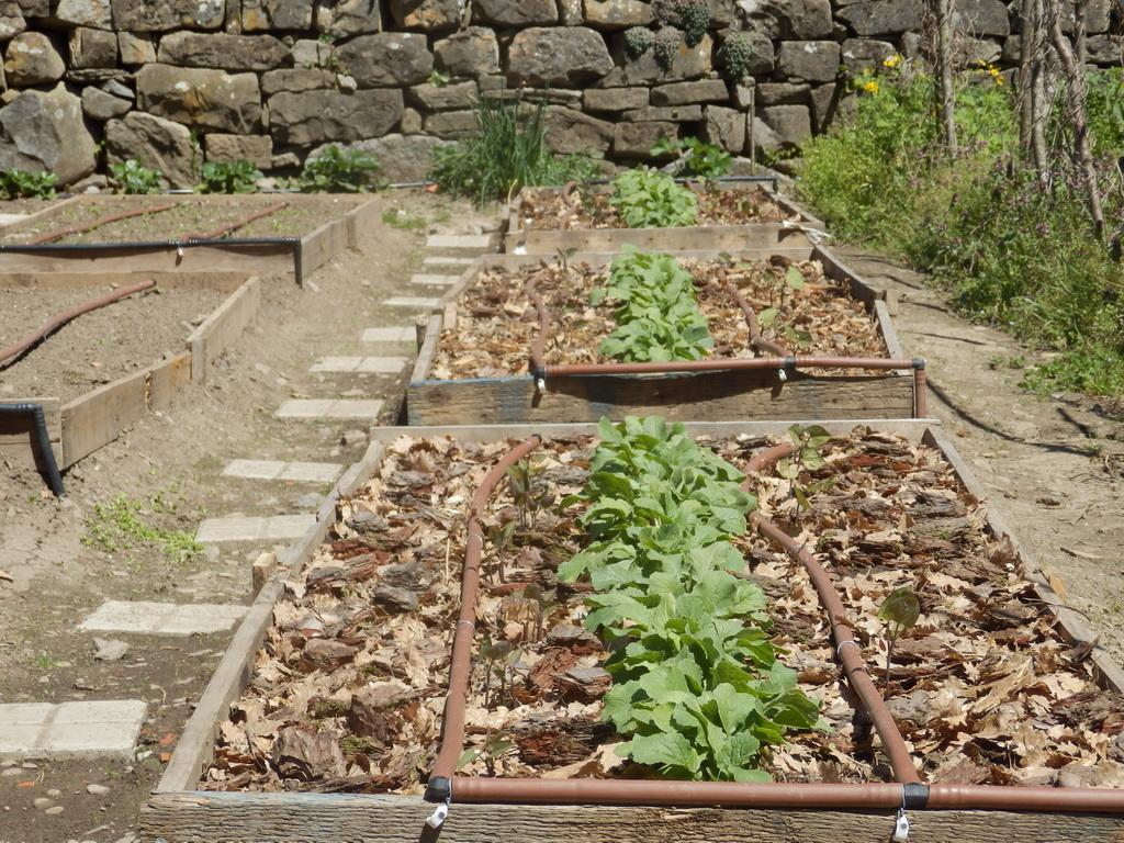 My Garden 2016 - Apr